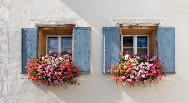 Growing Flowers on the Windows Outside